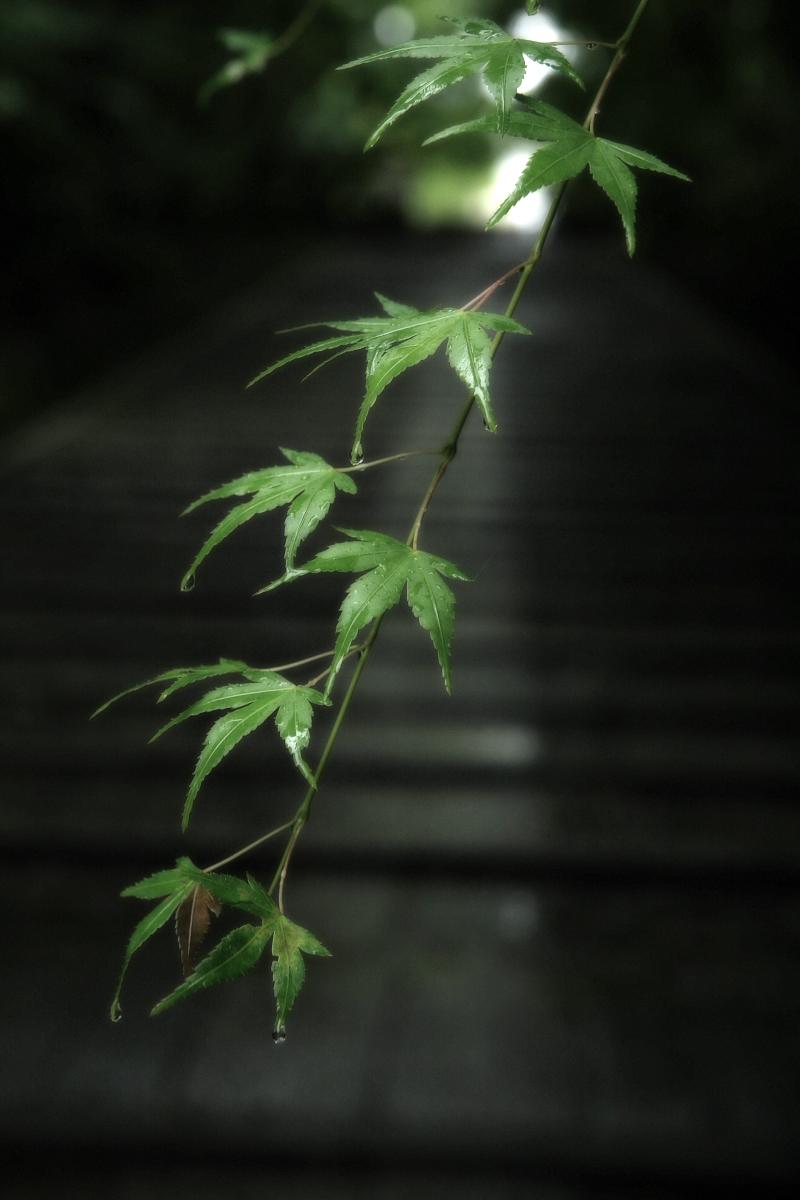 京都 西山三山 <光明寺> 1_f0021869_10445139.jpg