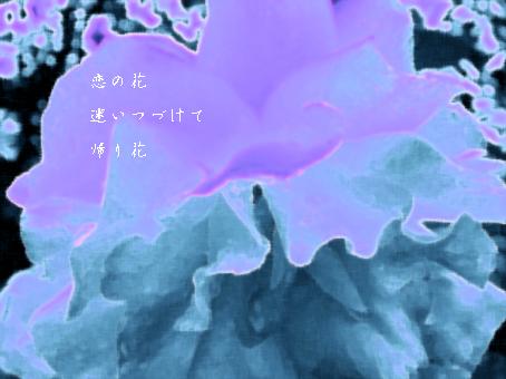 b0146278_95756.jpg