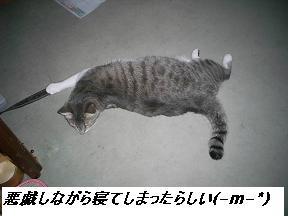 b0112380_20135775.jpg