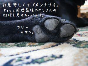 b0000885_1411527.jpg