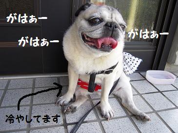 c0139488_15153469.jpg
