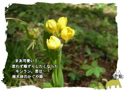 f0137096_12132094.jpg