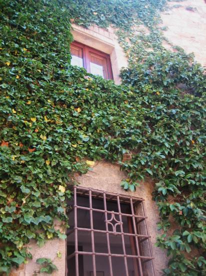 Palsの村で 4  窓いろいろ_b0064411_19531793.jpg