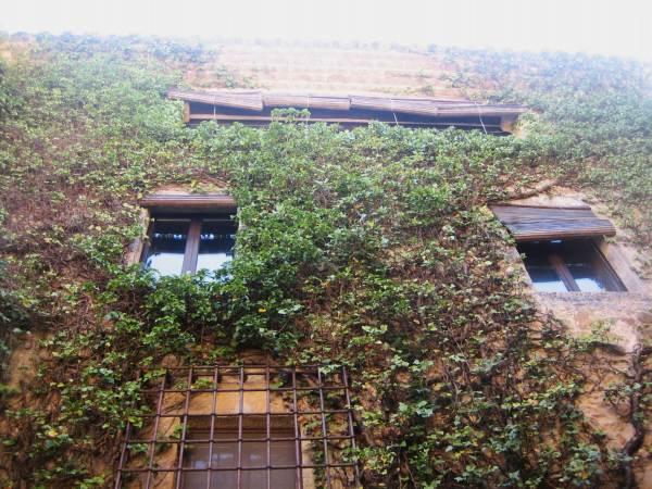 Palsの村で 4  窓いろいろ_b0064411_19562952.jpg