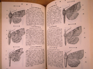 日本昆虫図鑑_e0064530_133444.jpg