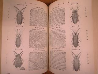 日本昆虫図鑑_e0064530_135645.jpg