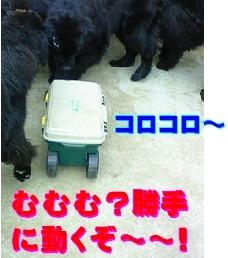 f0077931_1211391.jpg
