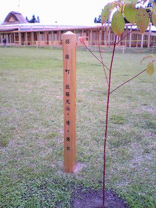 植樹祭から10日目_f0081443_20411535.jpg