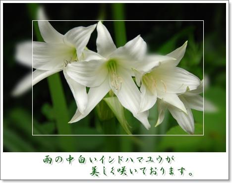 c0096348_19254589.jpg