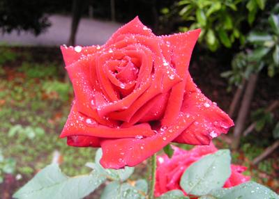 雨の中 ...._a0094959_15292189.jpg