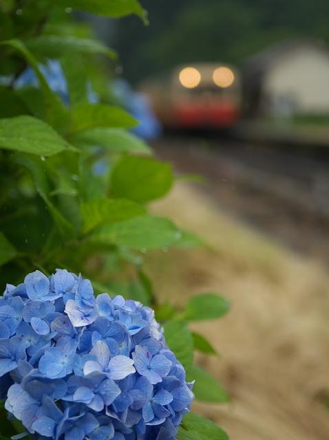 紫陽花の咲く駅 ~梅雨の月崎駅~_f0018464_6511575.jpg