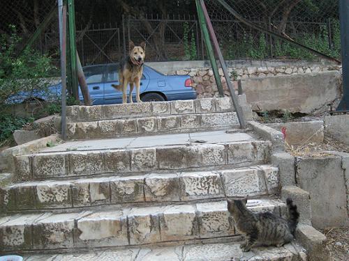 ご機嫌いかがですか、猫さんたち?_f0037264_1852545.jpg
