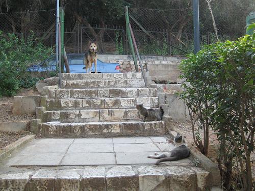 ご機嫌いかがですか、猫さんたち?_f0037264_1865322.jpg