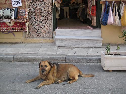 絨毯やさんの店先にいたカネロ_f0037264_5563522.jpg