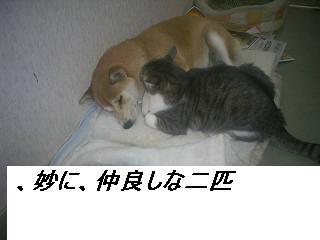 b0112380_10545581.jpg