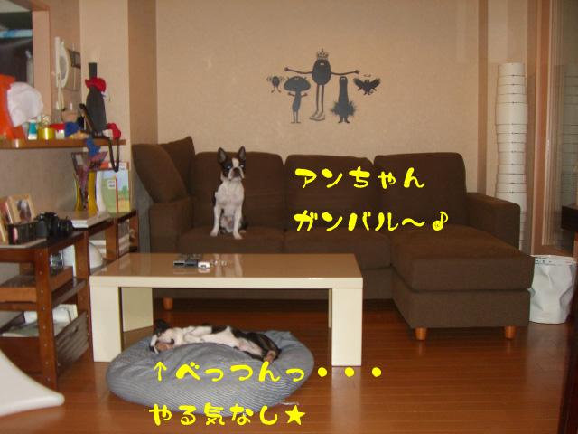 c0122897_0195178.jpg