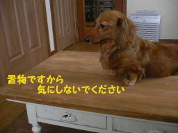 b0151505_1659672.jpg