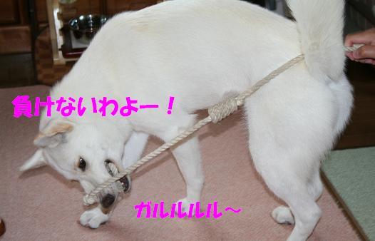 f0121712_1611459.jpg