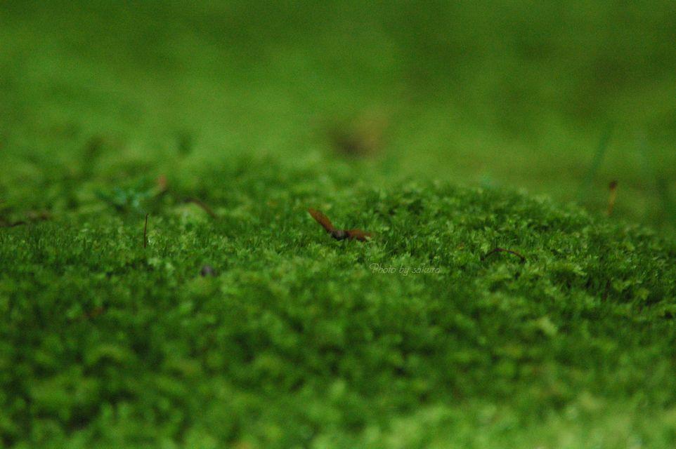 緑の絨毯_b0149624_11135189.jpg