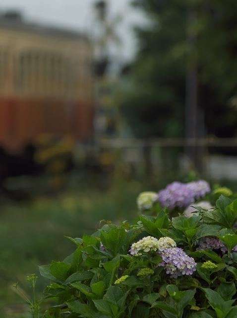 紫陽花のすこしだけ咲いていた駅_f0018464_6592648.jpg