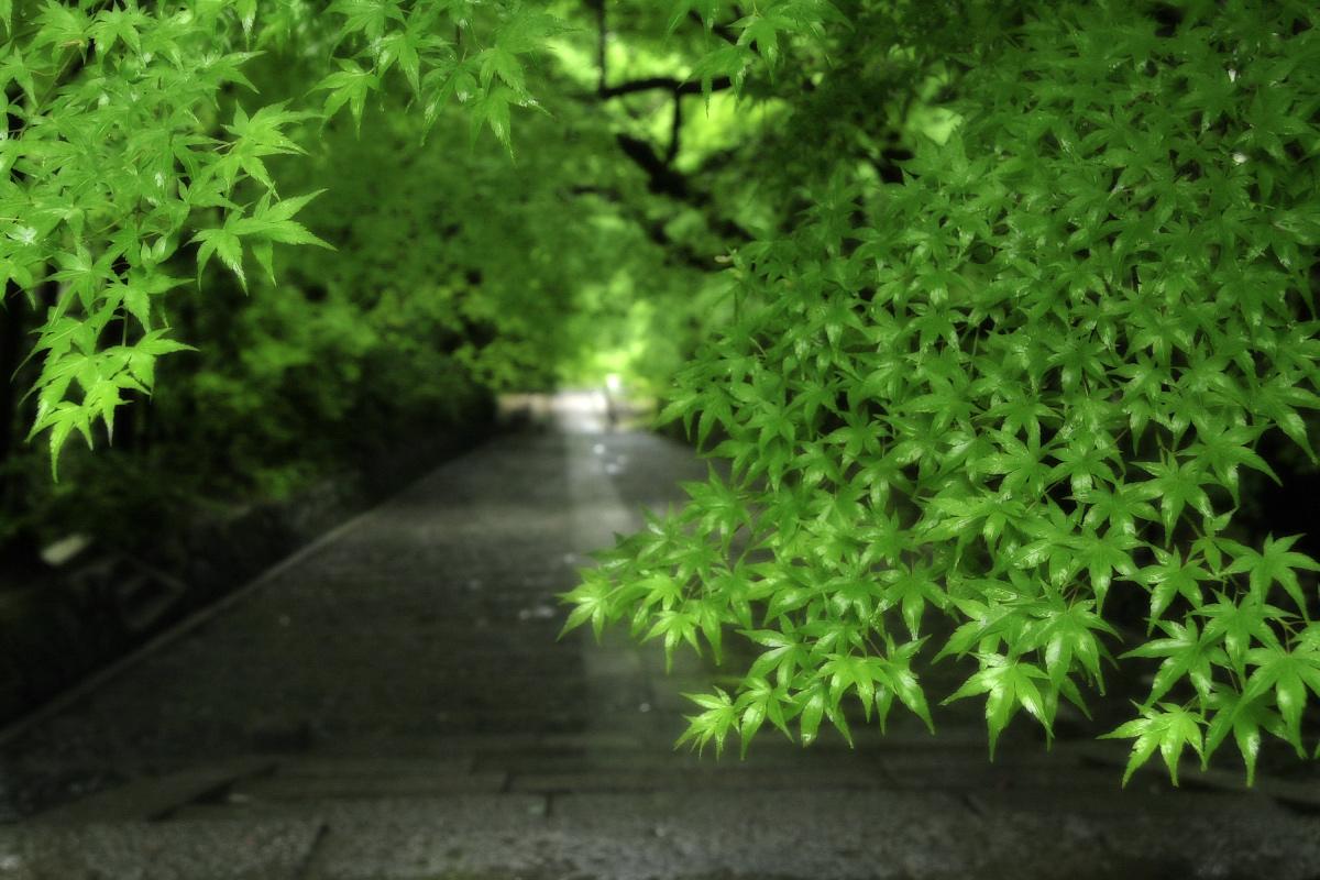 京都 西山三山 <光明寺> 2_f0021869_16331760.jpg