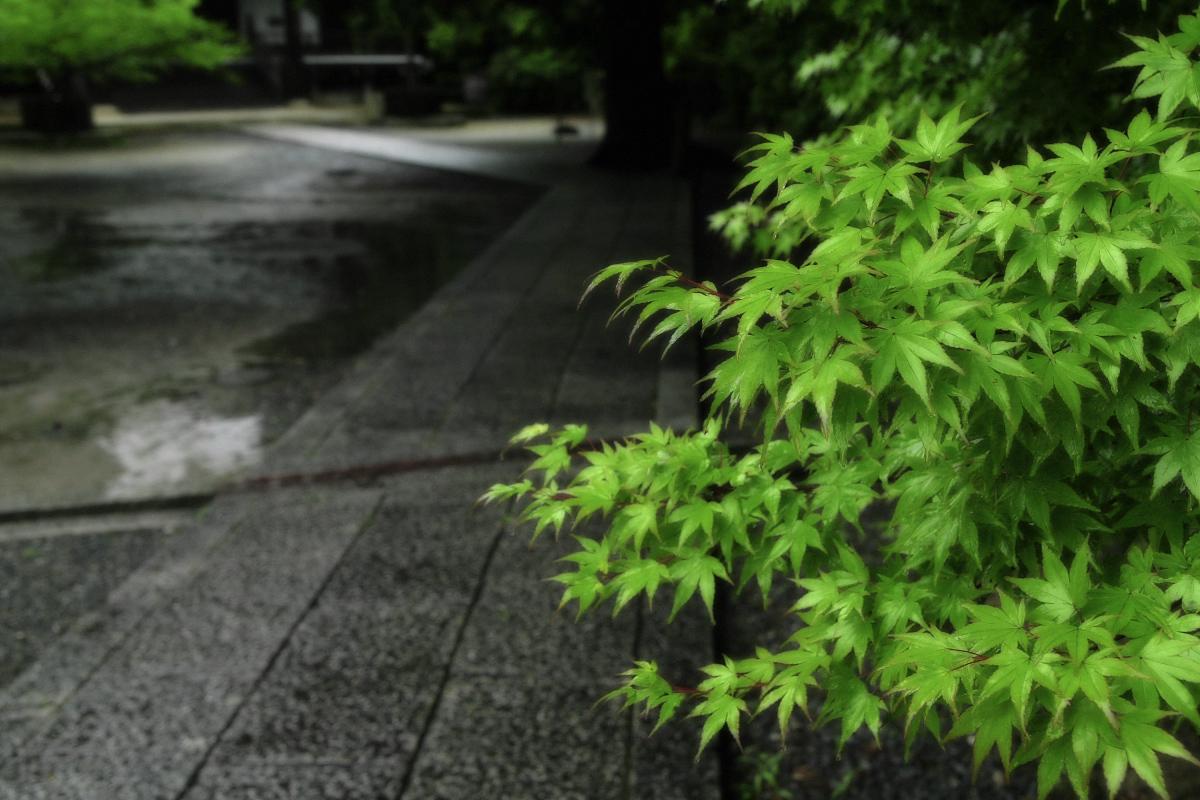 京都 西山三山 <光明寺> 2_f0021869_16334890.jpg