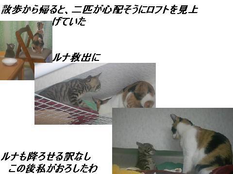 b0112380_1848419.jpg