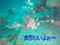 f0144385_033353.jpg