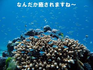 f0144385_1110412.jpg