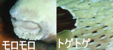 f0144385_2010153.jpg