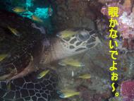 f0144385_20104987.jpg