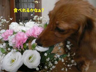 b0151505_1663345.jpg