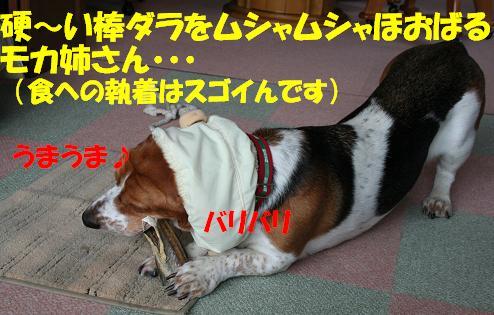 f0121712_1544561.jpg