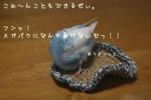 b0143835_171665.jpg