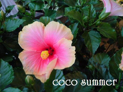 夏のような~梅雨のような~_c0130553_199223.jpg