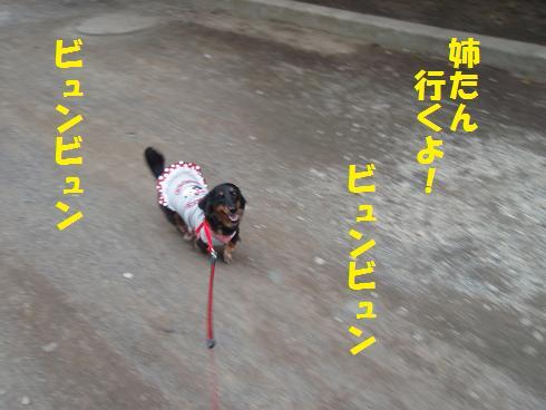c0151866_207341.jpg