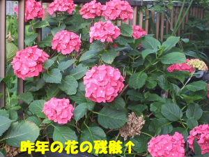 f0005081_1053328.jpg