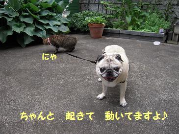 c0139488_1556481.jpg