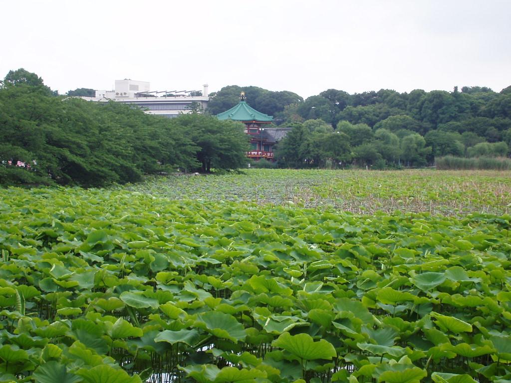 f0159291_20104046.jpg