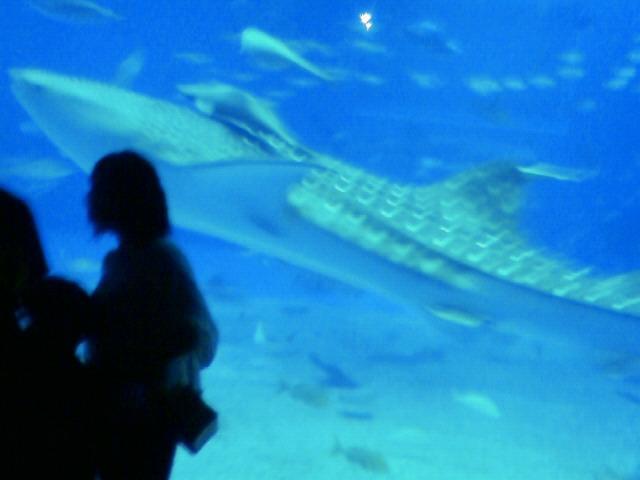 沖縄の風景 by ケータイ 美ら海水族館にやって来ました_f0024992_11565871.jpg