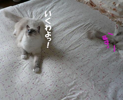 c0117597_17514541.jpg