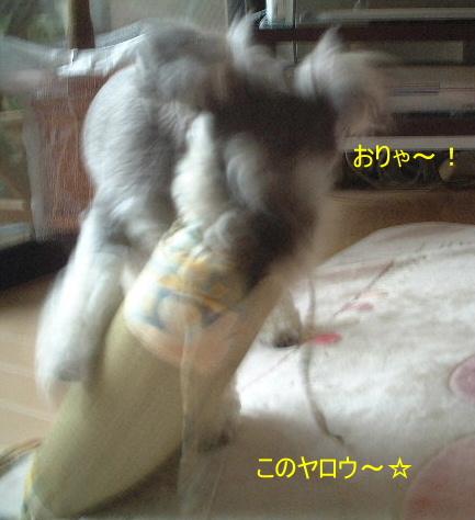d0079701_1930862.jpg