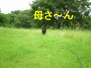 f0109202_1372561.jpg