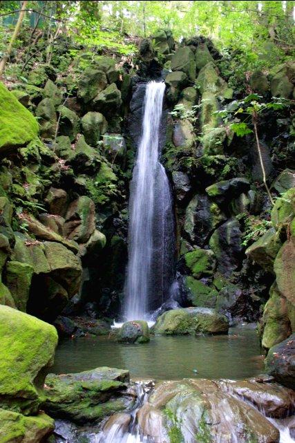 成田山公園_f0044056_10544871.jpg