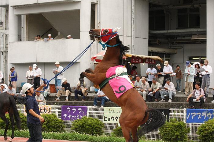 2008年6月22日(日) 高知競馬 5R_a0077663_811649.jpg