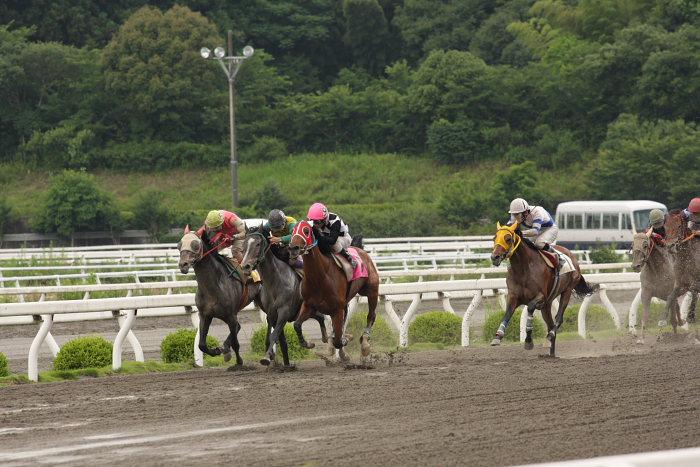 2008年6月22日(日) 高知競馬 5R_a0077663_821383.jpg