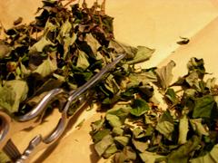 自家栽培ドクダミ茶完成_c0110869_23113742.jpg