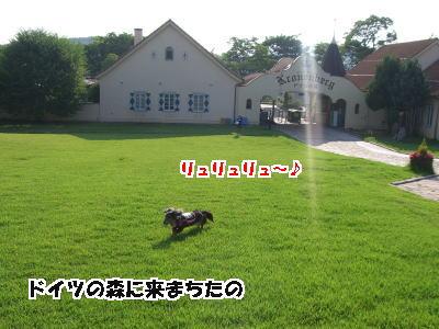 d0020869_15264879.jpg