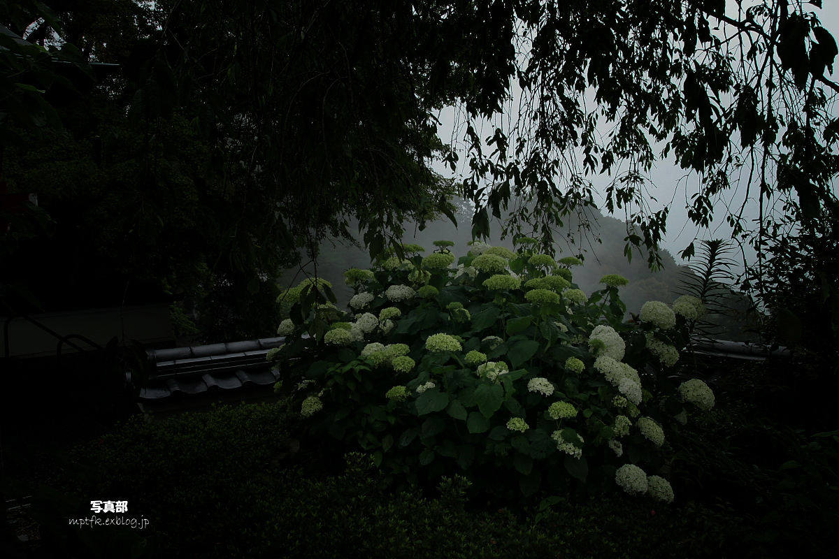 京都 西山三山 <善峯寺>  1_f0021869_21141878.jpg