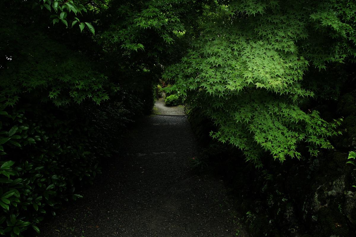 京都 西山三山 <善峯寺>  1_f0021869_2143562.jpg